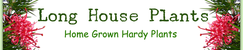 Longhouse Plants - Home Grown Hardy Plants